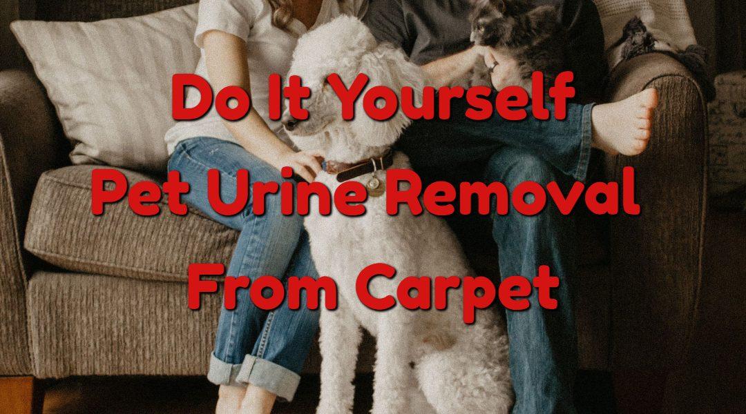 DIY – Pet Urine Odor Removal From Carpet